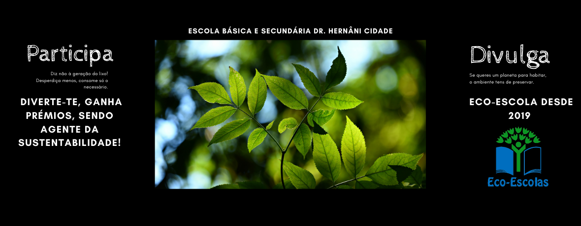 Ecoescolas (5)